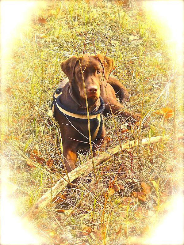 Labrador Erfahrungen